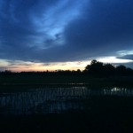 Night falling over the rice fields