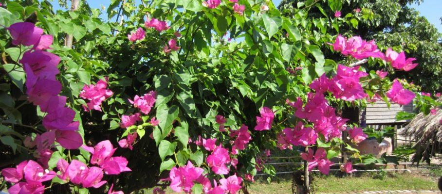 Flowers at garden aunt