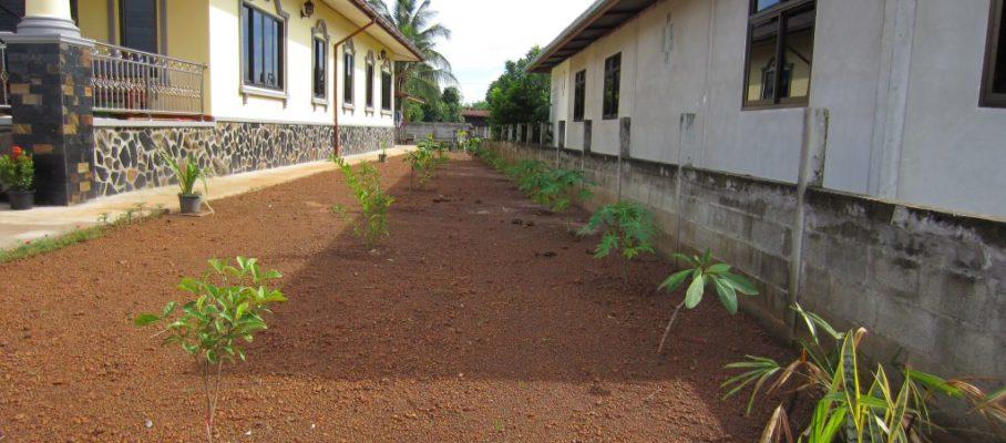 Papaya & plants