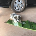 Banana leaf play
