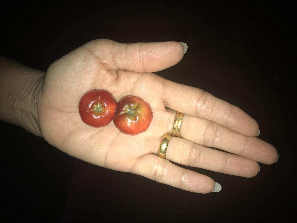 Thai cherries