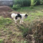 Chok Dee in garden