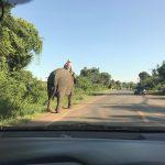 Chang (elephant)