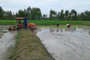 Ricefield Wannapa & Wutti