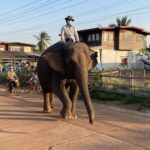 Elephant in our village